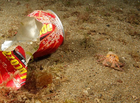 Alloy Can & Hermit Crab.jpg (2)